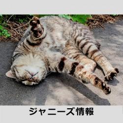 20150719sakurai
