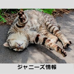 20170308_asagei_inagaki
