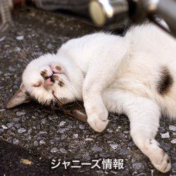 20170428_asajo_nakai