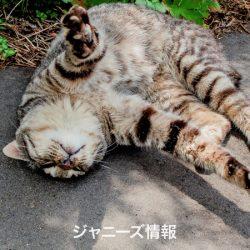 20170611_asajo_sakurai