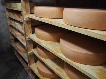 北海道チーズ「幸」に隠された情熱とは? |チーズ工房見聞録