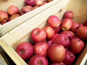 黒石観光りんご園「りんごの国」