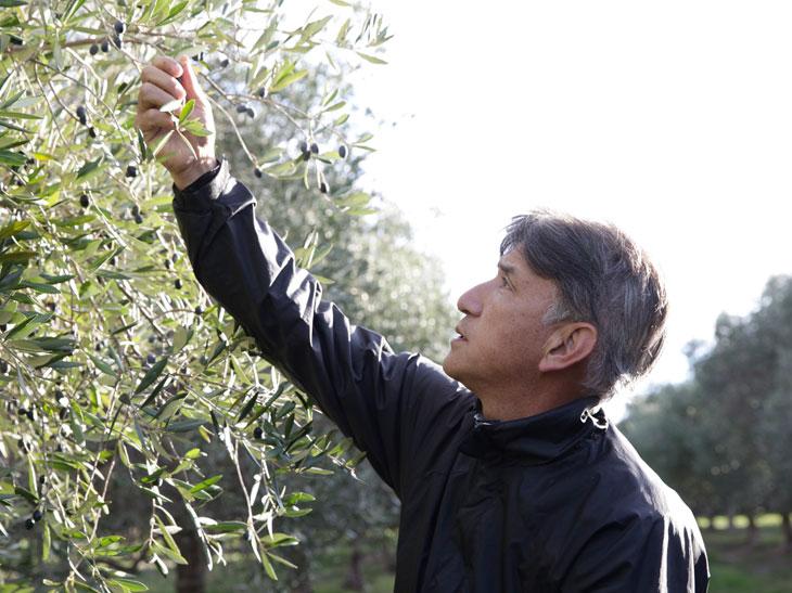 現地まで直接オリーブを確認する井上誠耕園の園主・井上智博氏