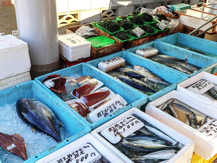 新鮮なお魚が「勝浦朝市」で購入できます
