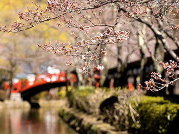 EDO WONDERLAND 歳時記 春の宴 ~江戸の花見~