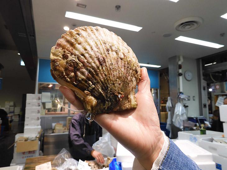 一般には出回らない特大殻付きホタテガイがお土産でもらえます!