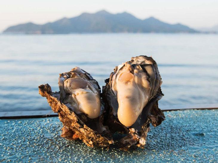 広島県江田島で養殖された大粒の牡蠣
