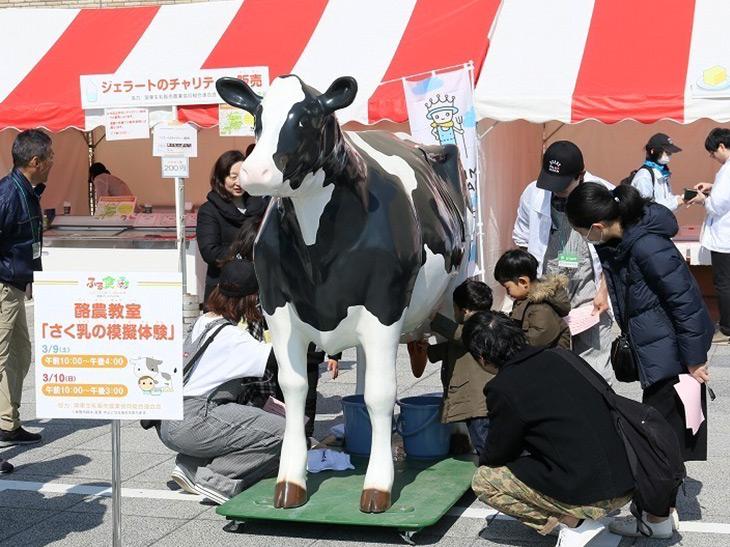 酪農教室では搾乳の擬似体験も!