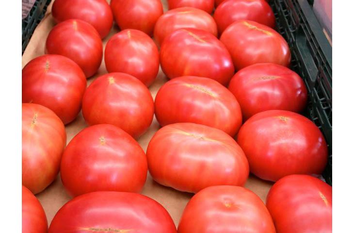大玉の「桃太郎トマト」。料理用にもぴったり
