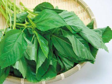夏に食べたい! 美容&栄養価抜群のモロヘイヤの「絶品レシピ」3選